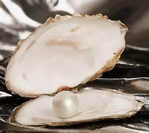 ostrica,perla